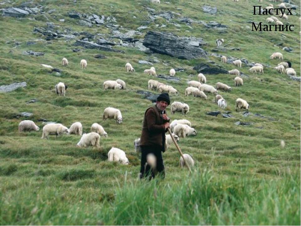 Пастух Магнис