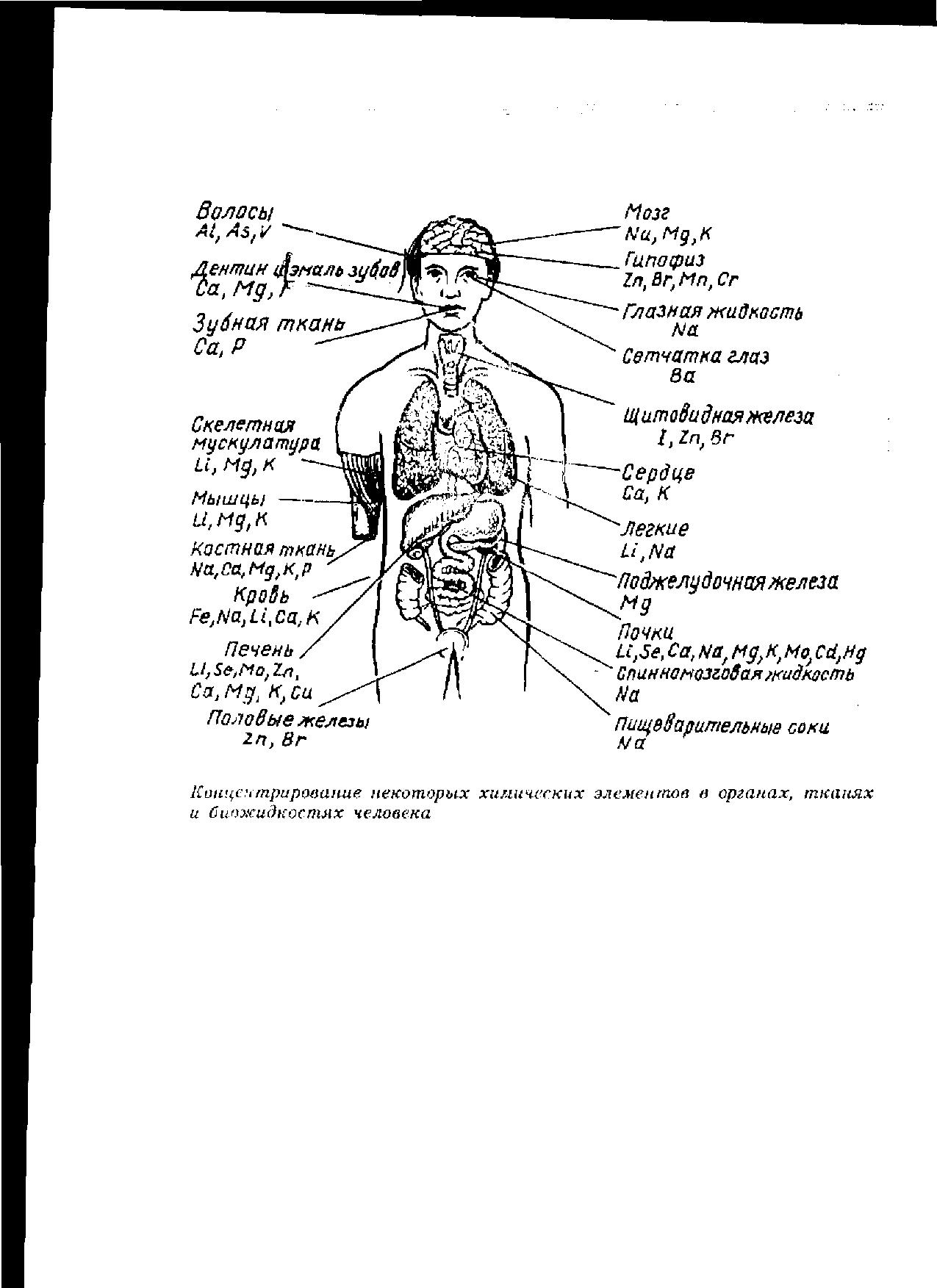 металлы в человеке