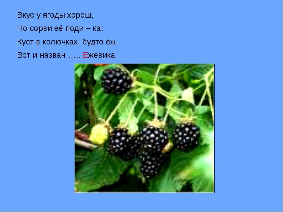 Вкус у ягоды хорош, Но сорви её поди – ка: Куст в колючках, будто ёж, Вот и...