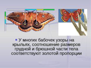 У многих бабочек узоры на крыльях, соотношение размеров грудной и брюшной час