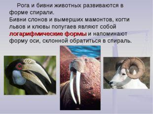 Рога и бивни животных развиваются в форме спирали. Бивни слонов и вымерших ма