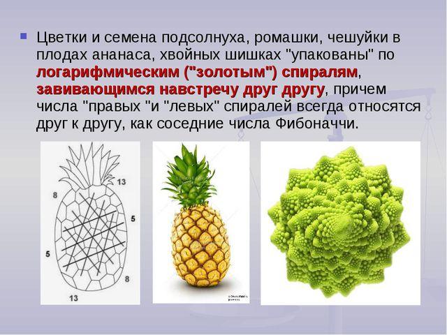 Цветки и семена подсолнуха, ромашки, чешуйки в плодах ананаса, хвойных шишках...