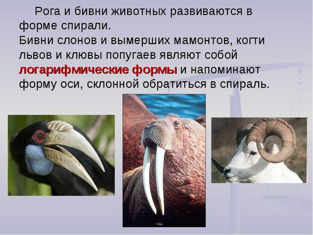 Рога и бивни животных развиваются в форме спирали. Бивни слонов и вымерших ма...