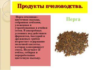 Продукты пчеловодства. Перга пчелиная– цветочная пыльца, собранная пчёлами, у