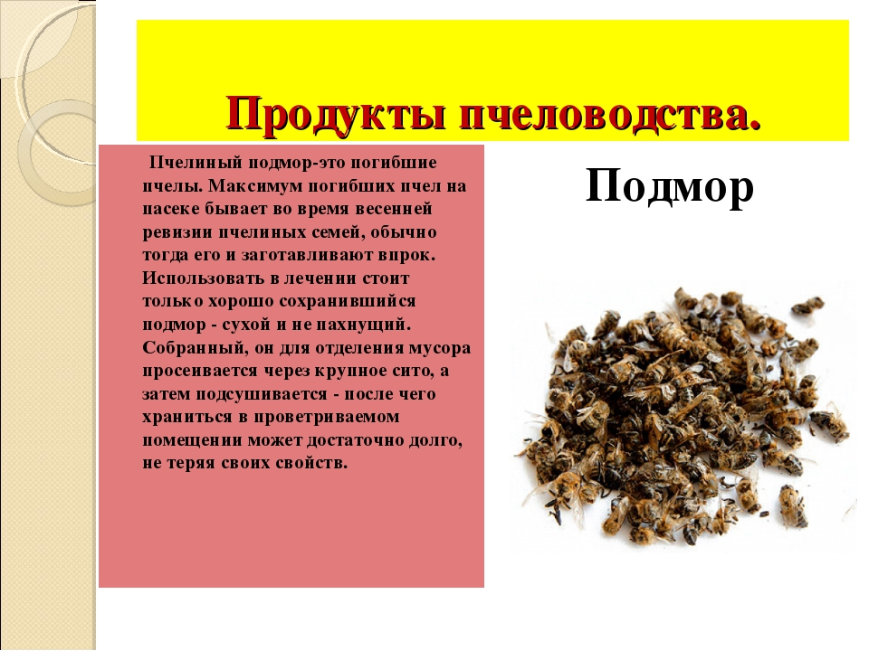 Продукты пчеловодства. Пчелиный подмор-это погибшие пчелы. Максимум погибших...