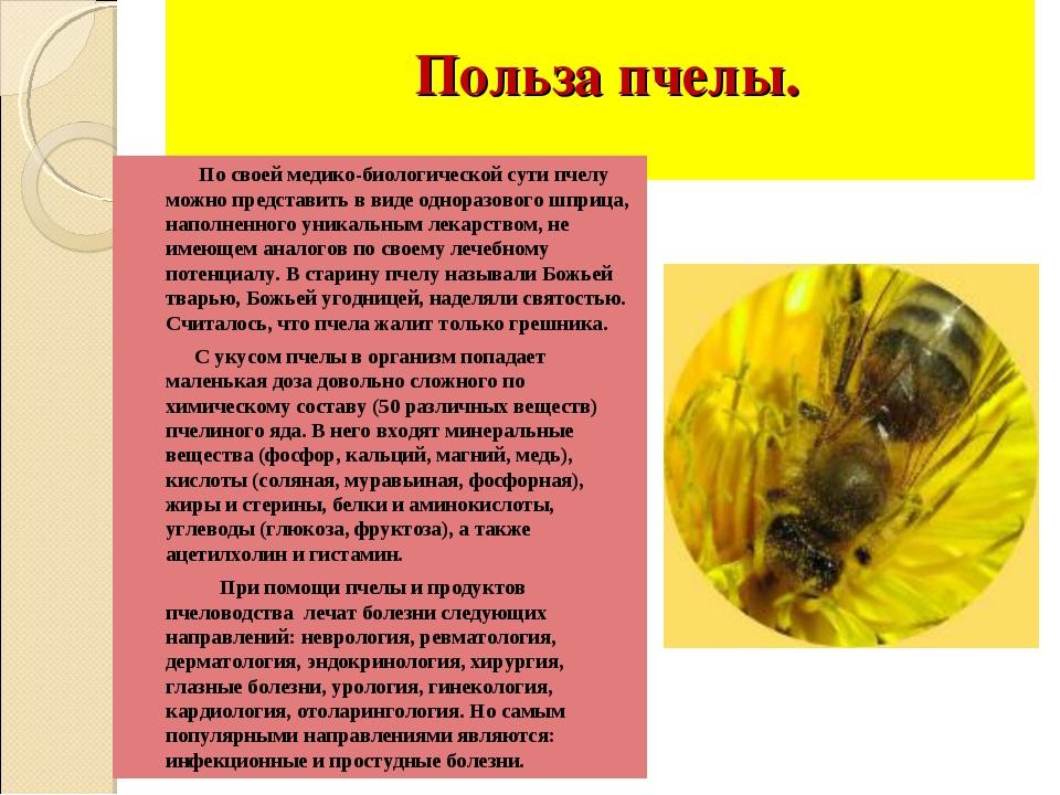 Польза пчелы. По своей медико-биологической сути пчелу можно представить в в...
