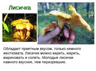 Лисичка Обладает приятным вкусом, только немного жестковата. Лисички можно ва