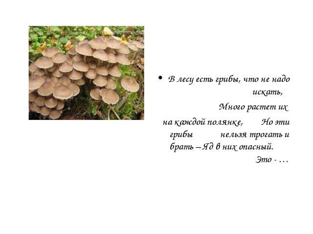 В лесу есть грибы, что не надо искать, Много растет их на каждой полянке, Но...