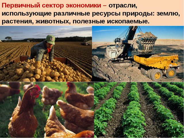 Первичный сектор экономики – отрасли, использующие различные ресурсы природы:...