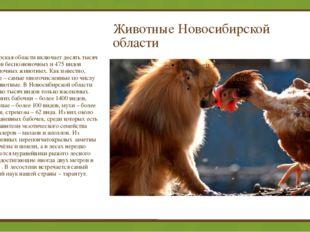 Животные Новосибирской области Новосибирская области включает десять тысяч в