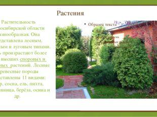 Растения Растительность Новосибирской области разнообразная. Она представлен