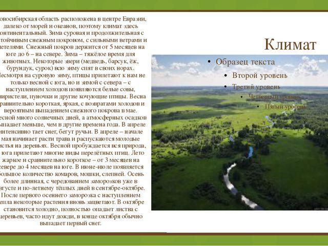 Климат Новосибирская область расположена в центре Евразии, далеко от морей и...