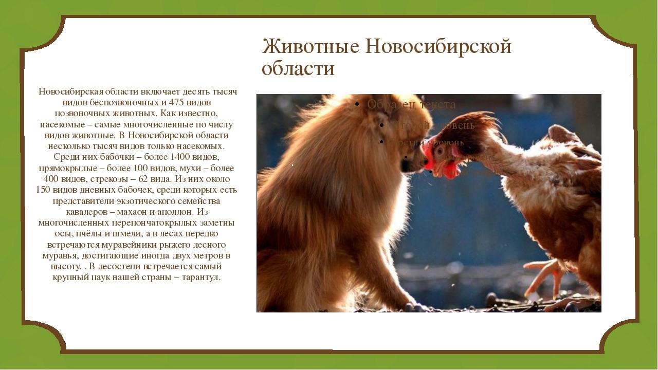 Животные Новосибирской области Новосибирская области включает десять тысяч в...