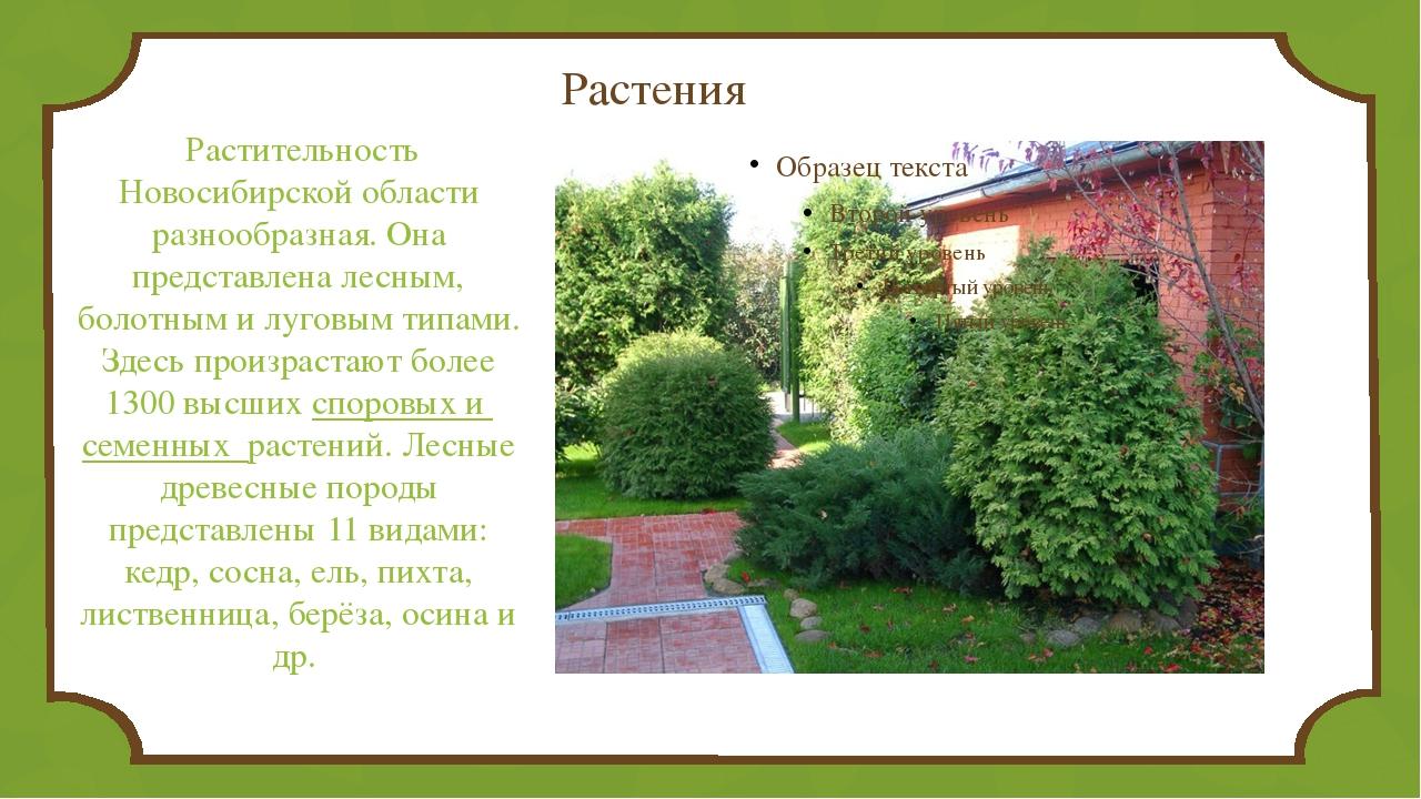 Растения Растительность Новосибирской области разнообразная. Она представлен...