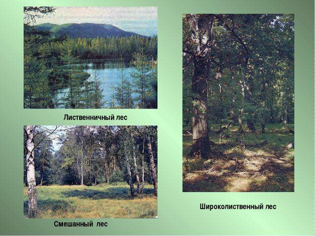 Широколиственный лес Лиственничный лес Смешанный лес
