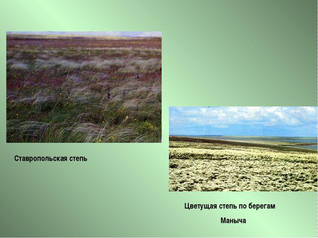 Цветущая степь по берегам Маныча Ставропольская степь