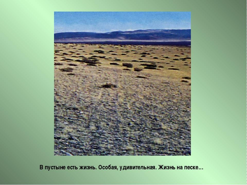 В пустыне есть жизнь. Особая, удивительная. Жизнь на песке…
