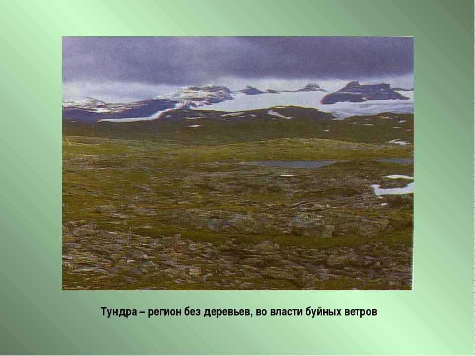 Тундра – регион без деревьев, во власти буйных ветров