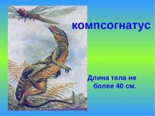Длина тела не более 40 см. компсогнатус