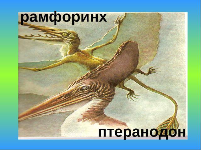 рамфоринх птеранодон