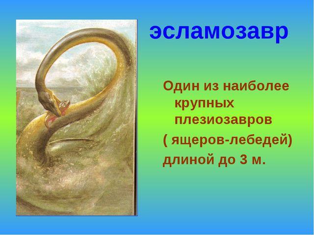 эсламозавр Один из наиболее крупных плезиозавров ( ящеров-лебедей) длиной до...