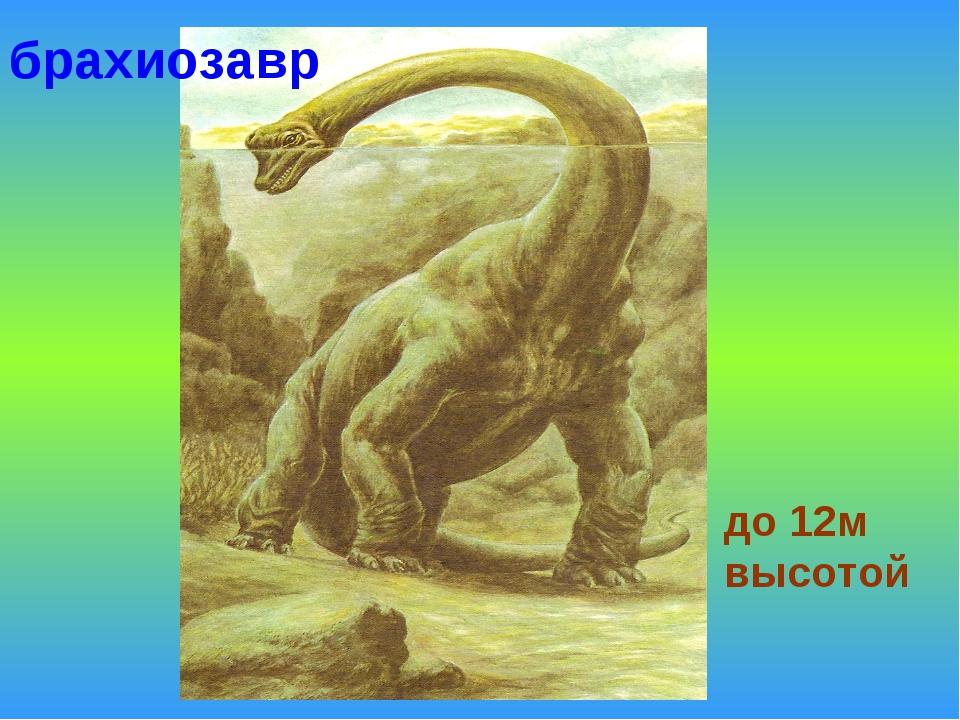 до 12м высотой брахиозавр