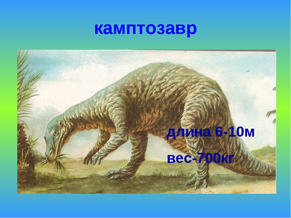 камптозавр длина 6-10м вес-700кг