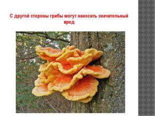 С другой стороны грибы могут наносить значительный вред