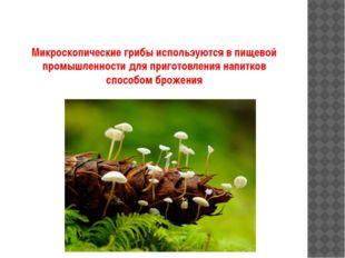 Микроскопические грибы используются в пищевой промышленности для приготовлени