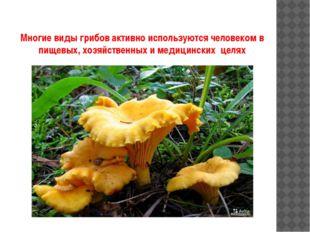 Многие виды грибов активно используются человеком в пищевых, хозяйственных и