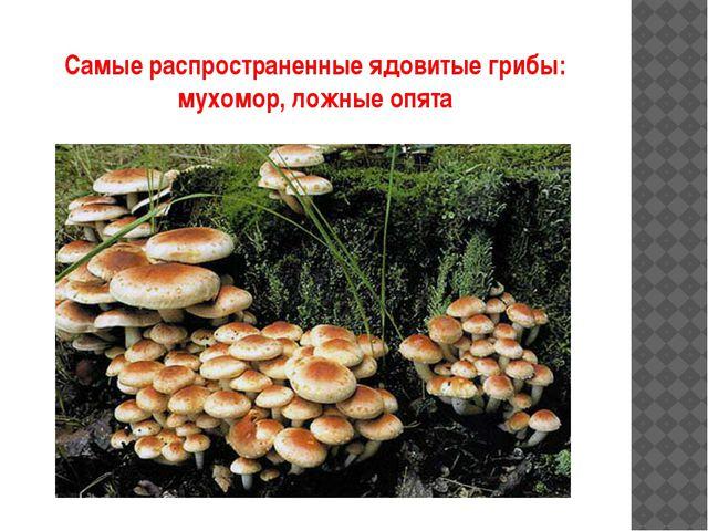 Самые распространенные ядовитые грибы: мухомор, ложные опята