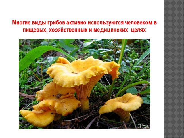 Многие виды грибов активно используются человеком в пищевых, хозяйственных и...