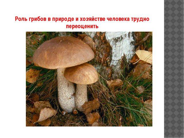 Роль грибов в природе и хозяйстве человека трудно переоценить