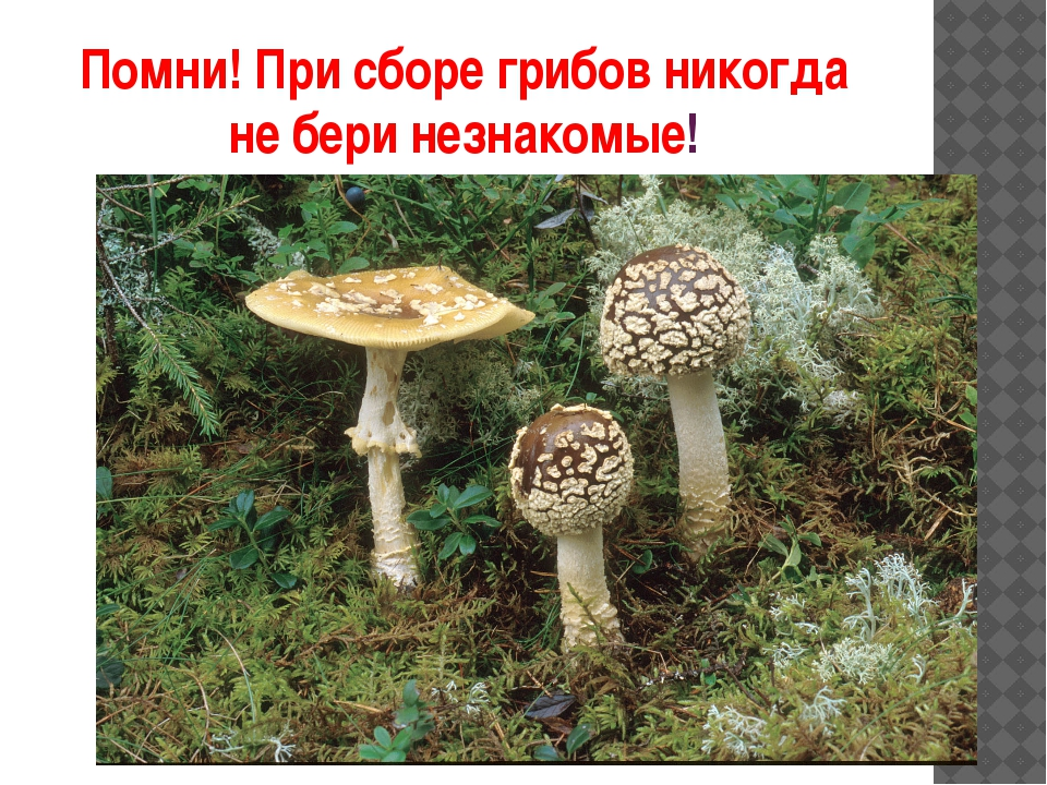 Помни! При сборе грибов никогда не бери незнакомые!