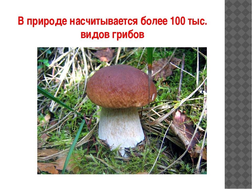 В природе насчитывается более 100 тыс. видов грибов