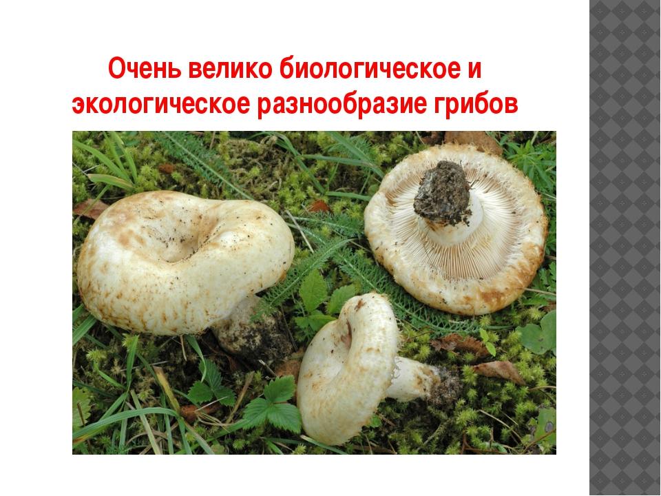 Очень велико биологическое и экологическое разнообразие грибов