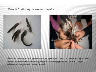 Опыт № 3: «Что внутри махового пера?» Рассмотрев перо, мы решили посмотреть,