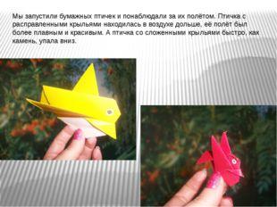 Мы запустили бумажных птичек и понаблюдали за их полётом. Птичка с расправлен