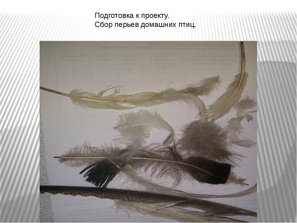 Подготовка к проекту. Сбор перьев домашних птиц.