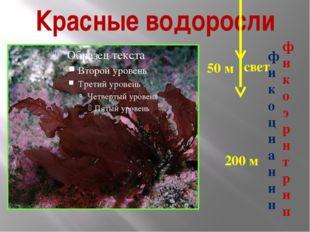 Красные водоросли 200 м свет 50 м фикоцианин фи к о э р и т р и н