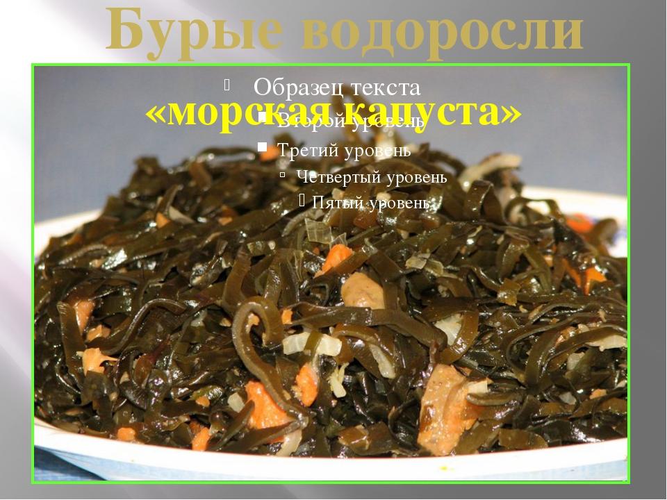 ламинария Бурые водоросли «морская капуста»