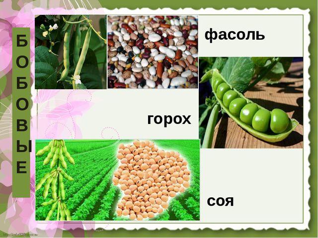 Б О Б О В Ы Е фасоль горох соя http://linda6035.ucoz.ru/