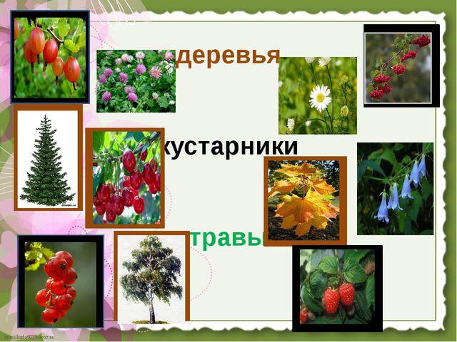 деревья кустарники травы http://linda6035.ucoz.ru/