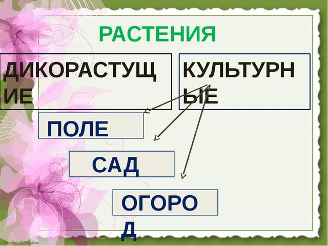 РАСТЕНИЯ ДИКОРАСТУЩИЕ КУЛЬТУРНЫЕ ПОЛЕ САД ОГОРОД http://linda6035.ucoz.ru/