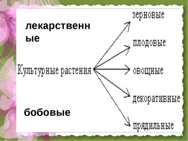 лекарственные бобовые http://linda6035.ucoz.ru/