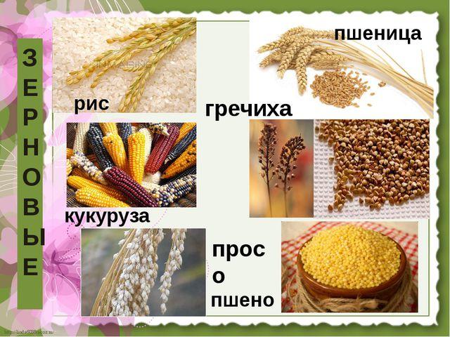 З Е Р Н О В Ы Е пшеница рис гречиха просо пшено кукуруза http://linda6035.uco...