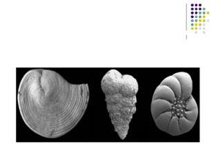 У морях на зміну морським рептиліям прийшли нові види хижих кісткових риб та