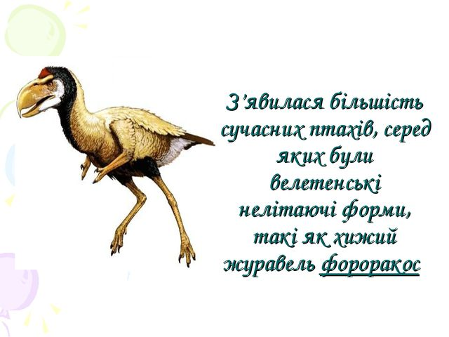 З'явилася більшість сучасних птахів, серед яких були велетенські нелітаючі фо...