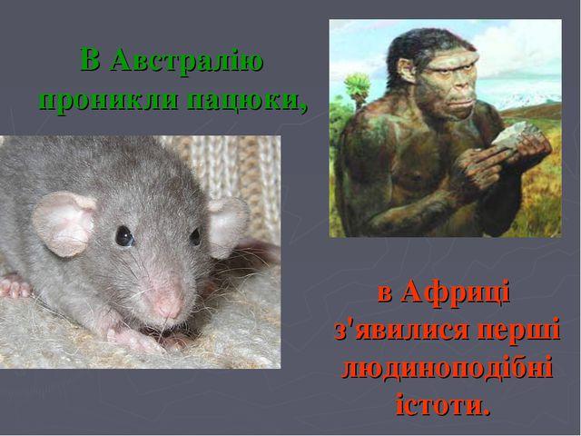 В Австралію проникли пацюки, в Африці з'явилисяперші людиноподібні істоти.