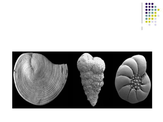 У морях на зміну морським рептиліям прийшли нові види хижих кісткових риб та...